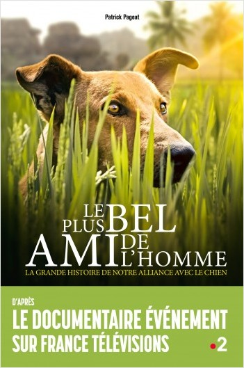 Le chien : le plus bel ami de l'Homme
